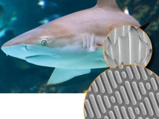 shark's groovy skin