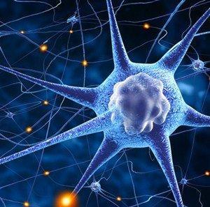 4 neuroplasticity