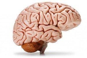 6 human brain